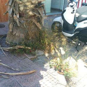 Ciudadanos Almuñécar – La Herradura denuncia el estado de abandono de las jardineras de las aceras y los oasis de las playas
