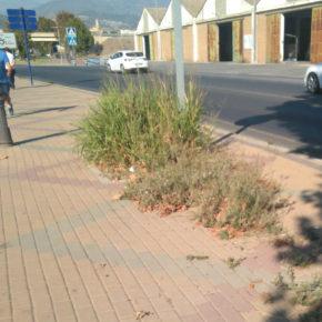 Ciudadanos denuncia la falta de mantenimiento del paseo del Puerto de Motril