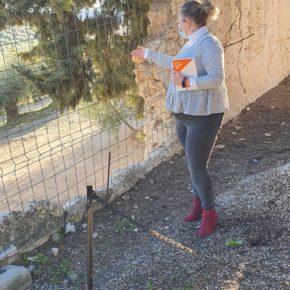 """Ciudadanos critica el """"absoluto abandono a su suerte"""" que sufre el cementerio de Íllora"""